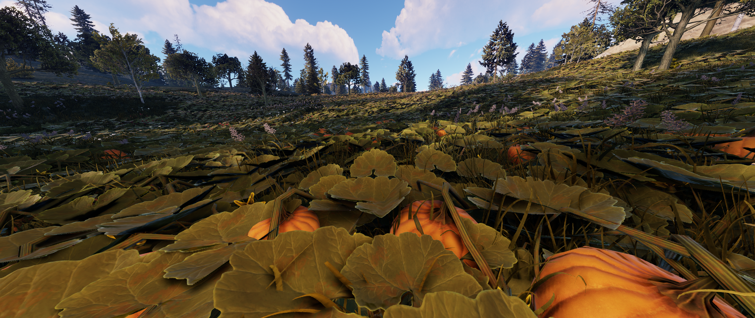 The Performance Update – RustyForest