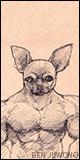 Avatar of Chihuahua