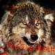 Avatar of Raging Wolf