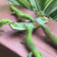 Avatar of Admiral Gecko